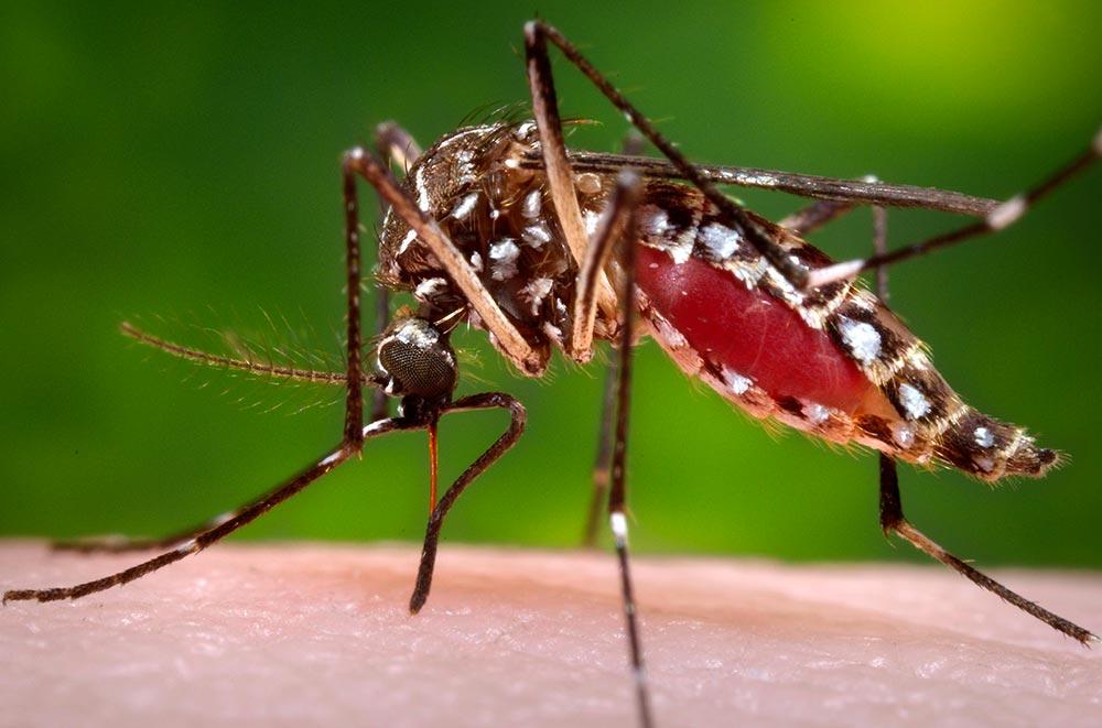 Segundo a Secretaria da Saúde, número de casos de Dengue em Três Lagoas é preocupante