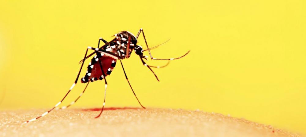 Dengue avança em Mato Grosso do Sul e, em uma semana já registra mais de quatro mil novas notificações
